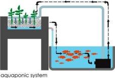 kijani-grows-aquaponics