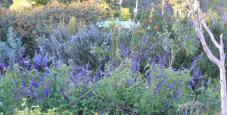 wb_garden